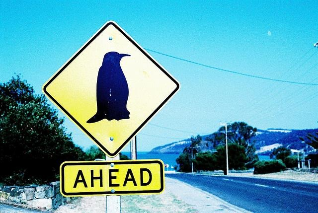 Google Penguin Ahead