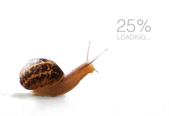 Snail Slow Website